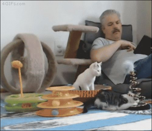 4gifs:  Kitten playroom supervisor…why isn't this my job....