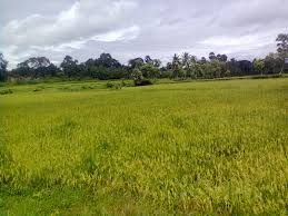 Agricultural Land For Sale After #Shankarpally - Goodhomz  #BestAgricultural #lands for #sale in after #Shankarpally Price: 10 lakhs to 20 lakhs Negotiable per acres  contact 9100953019 http://www.goodhomz.com/