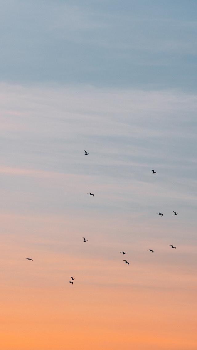 Birds In The Sky Birds In The Sky Sunset Wallpaper Aesthetic Pastel Wallpaper Birds in sky desktop wallpapers free