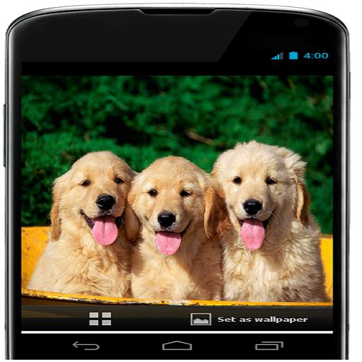 Amazon Com Ice Cream Wallpaper Appstore For Android: Best 20+ Cute Dog Wallpaper Ideas On Pinterest