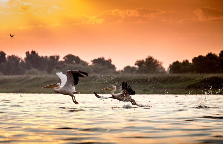 Photo of the day - Danube Delta by Radu Dumitrescu-Elian #amazing #romania #tour #travel #danube #delta  http://buff.ly/1OHxhMg?utm_content=buffera721c&utm_medium=social&utm_source=pinterest.com&utm_campaign=buffer