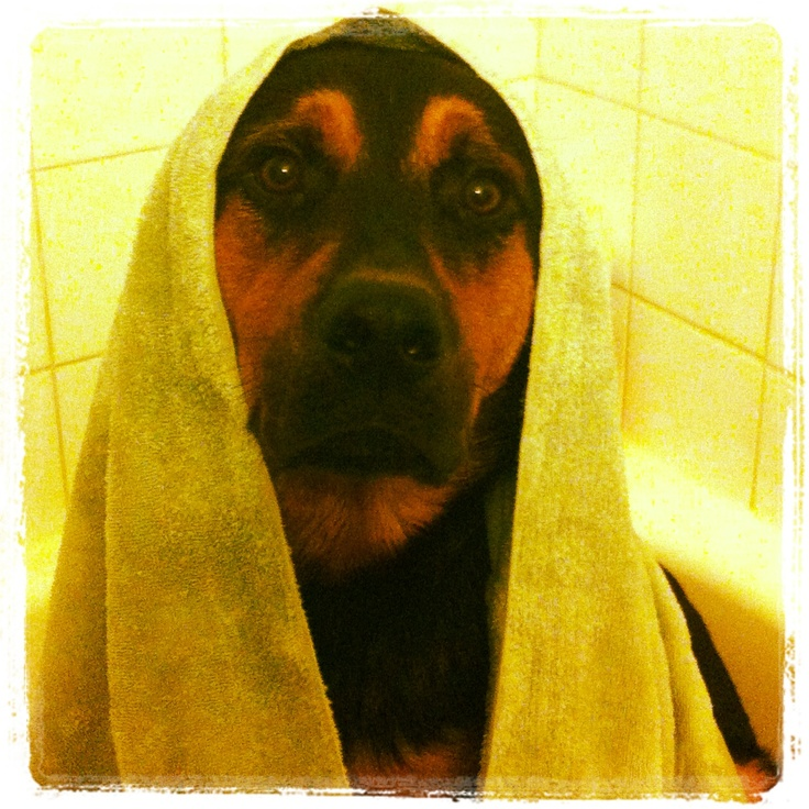 Lecter after the shower