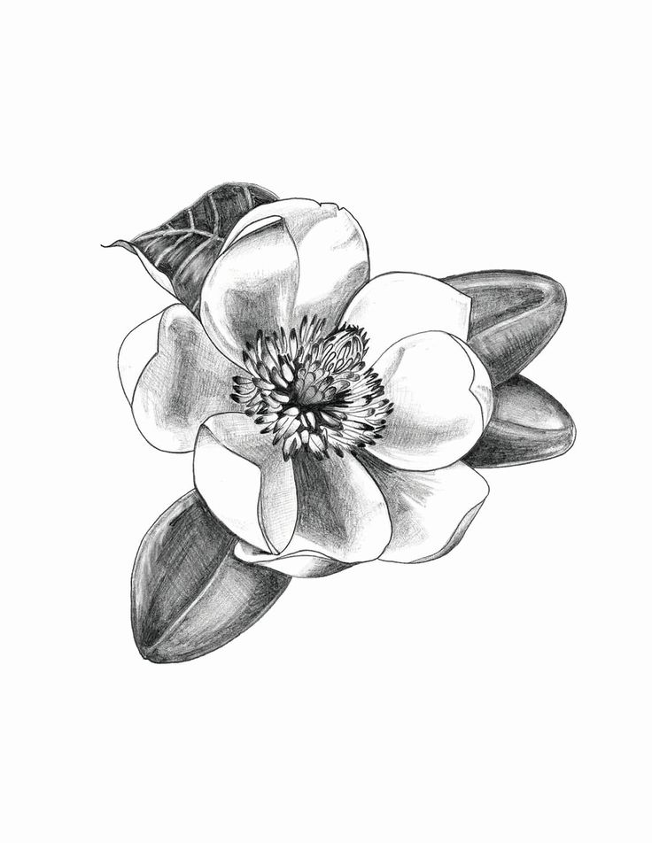 Magnolia http://www.etsy.com/shop/TheDistrictGarden