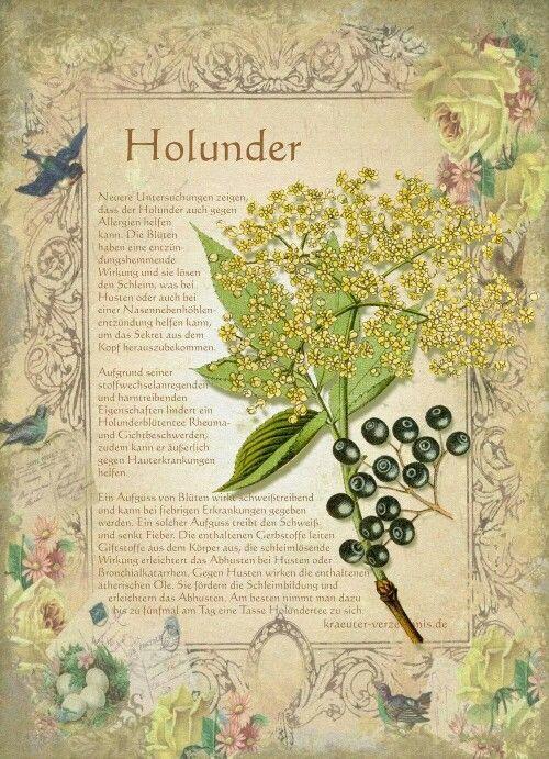 top 25 best holunderbaum ideas on pinterest holunder pflanzen bildtafeln and kaninchenfutter. Black Bedroom Furniture Sets. Home Design Ideas
