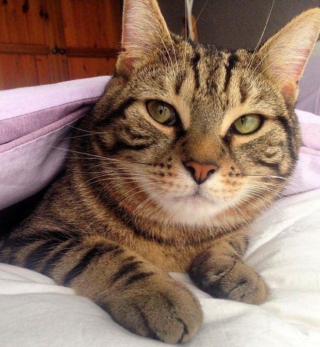 300 Elegant Cat Names Tabby Cat Cat Names Cats