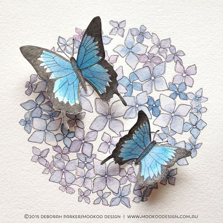 Week 4: Insects No.1. Butterflies on hydrangea.