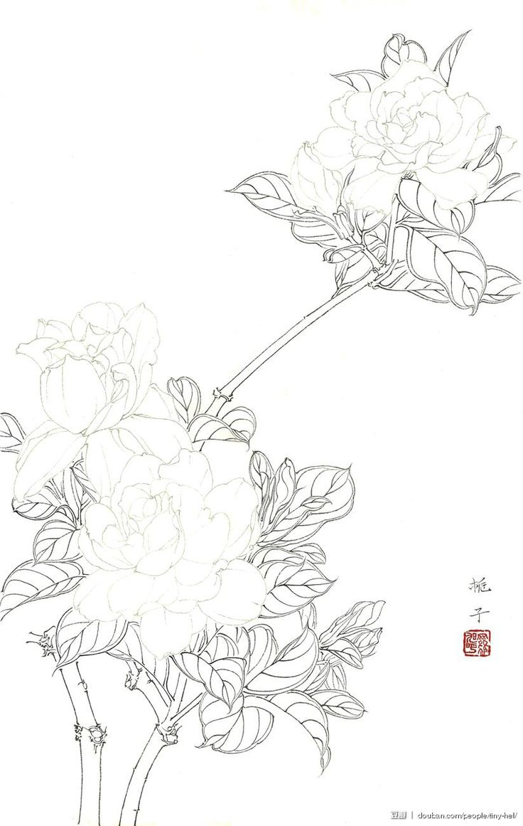 best drawing flower sketch images on pinterest embroidery