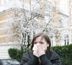 Die Pollen fliegen wieder - Allergieforschung - Der Pollenflug hat dieses Jahr schon deutlich früher als sonst eingesetzt.