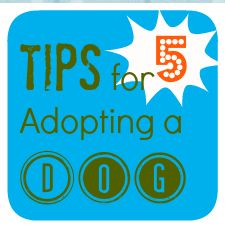 5 Practical Tips for Adopting a Dog- I would add that Obedience Training would be good for any age dog to bond and learn what each of you want from the other