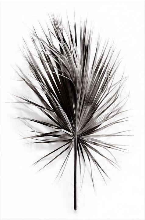 botanical print , fine art , chic , elegant ,photography, black and white,  palm frond,