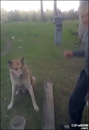 I just cannot watch this gif too many times. IMO, this is one of the best gifs of all time. I love this ham of a dog!