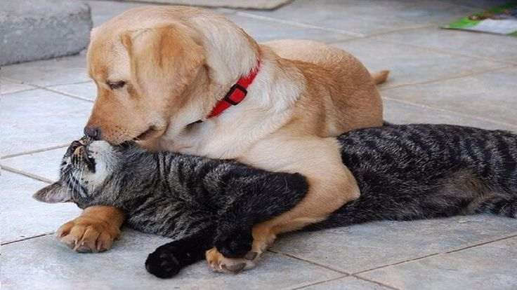HUND OG KATT | Roliga hundar Vs. roliga katter - Roliga klipp med djur | Roliga klipp ...
