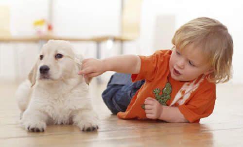Niños  perros