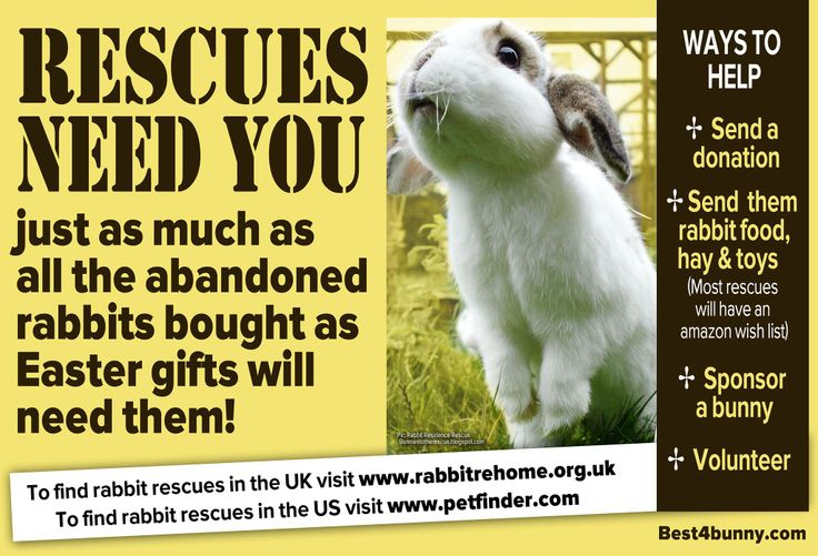 The rescues need you! Rescues everywhere will soon be inundated with unwanted abandoned bunnies bought as Easter gifts & they will need all the help they can get. For more information on helping rescues go to http://best4bunny.com/bunny-care/supporting-rescues/