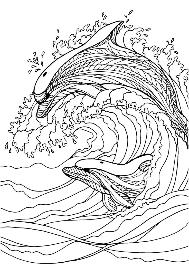 Dolphin adult colouring page Colouring In Sheets Art