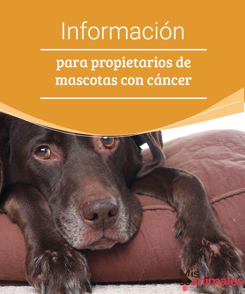 Información para propietarios de mascotas con cáncer  Síntomas, tratamientos, consejos y todo aquello que necesitas saber sobre mascotas con cáncer. Así afrontarás mejor esta terrible enfermedad. #síntomas #tratamientos #salud #cáncer