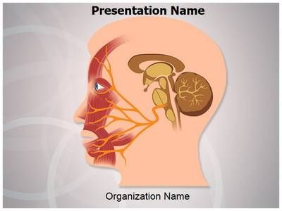 40 best medical powerpoint ppt templates microsoft images on this nervous system facial nerve ppt template comes with different slides of editable graphs charts and diagrams to help you in making powerful toneelgroepblik