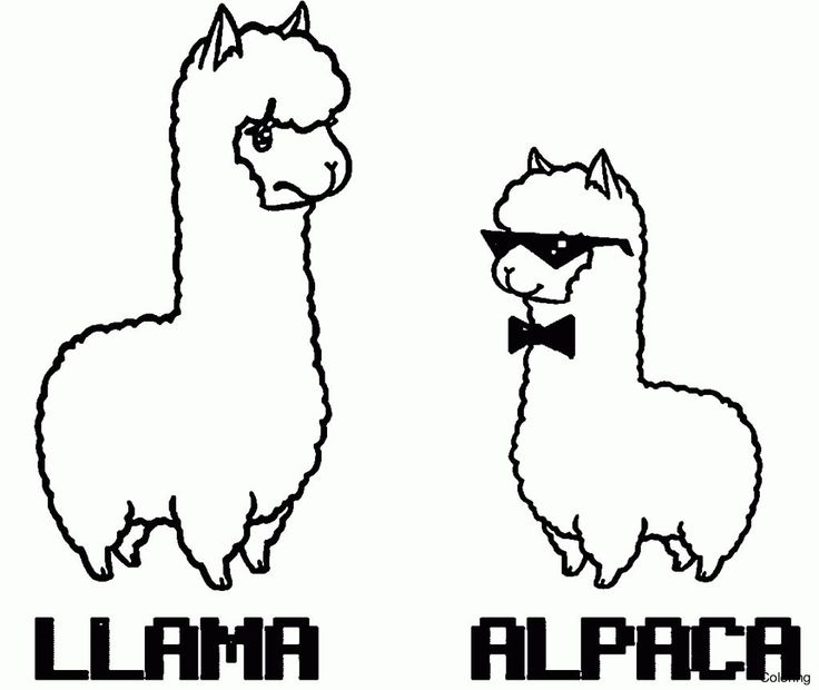 popular llama coloring pages knowledgeable alpaca page 3f