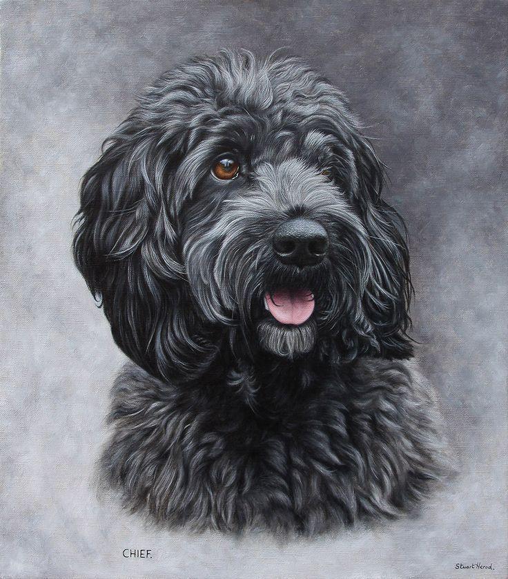Bleistiftzeichnungen von Cockapoos | Hund Kunst Gemälde | Hunderassen Bild