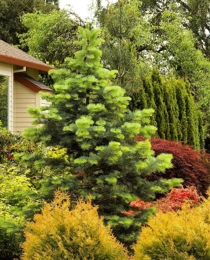 54 Best Designs With Trees And Shrubs Images On Pinterest