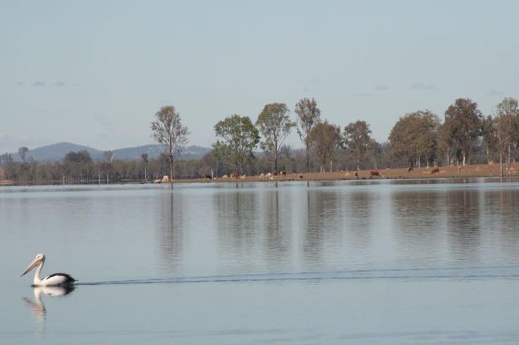 Atkinson-Dam morning 2