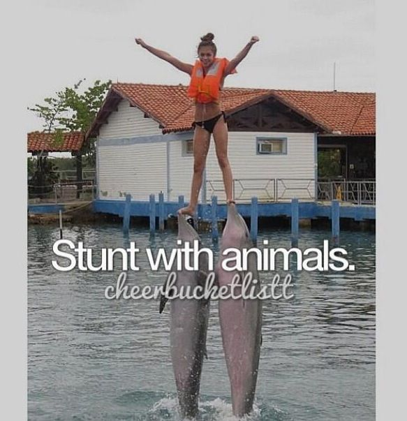 Cheer bucket list haha I've done this with dolphins too