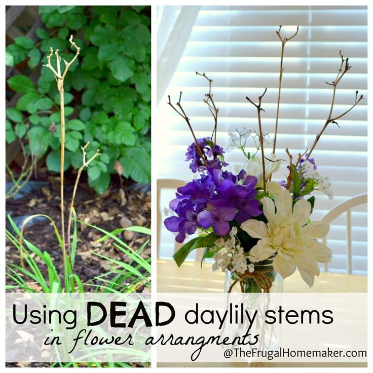 Using Filler In Fluff In Home Decor Making Arrangements: Using Dried Daylily Stems As Decor