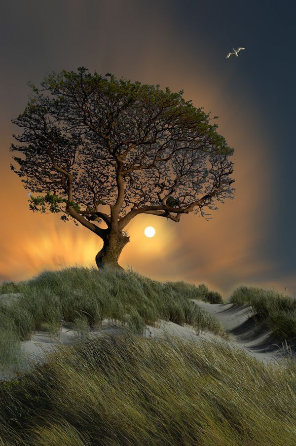 Lone tree in the sand dunes.  Beautiful!