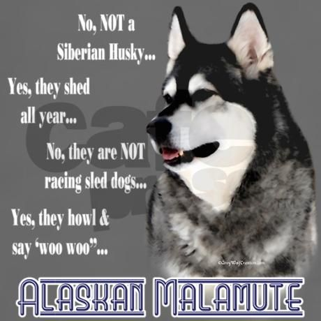 Malamute Faq2 Women S Dark T Shirt Siberian Huskies