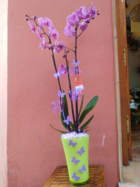 Phalaenopsis www.floristeriaivars.es