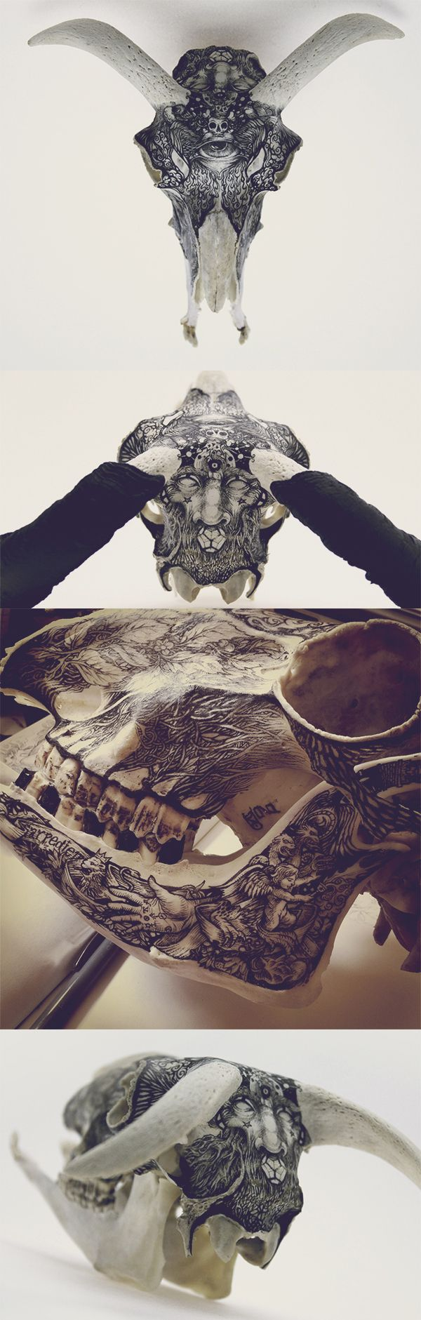 #painted #skull by DZO Olivier