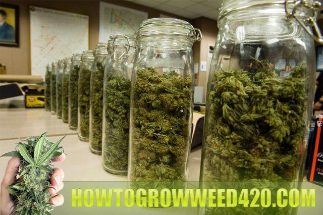 How to grow like a pro