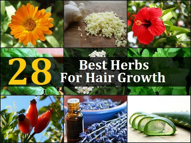 28 Best Herbs For Hair Growth