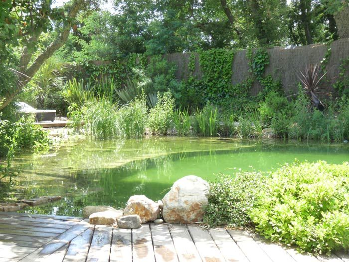 1000 images about project pond on pinterest natural for Piscine biologique