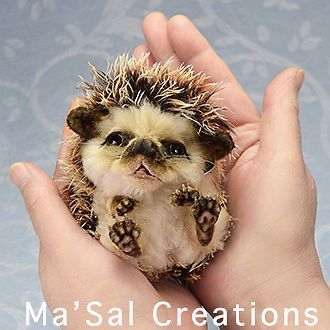 Ma'Sal original /Special Dolly Friend Hedgehog Baby / direct from the Artist #AllOccasion