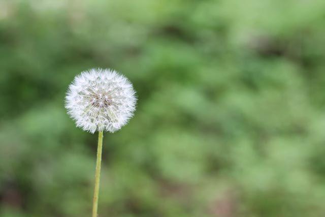 Αλλεργία, μια σύγχρονη επιδημία που αντιμετωπίζεται