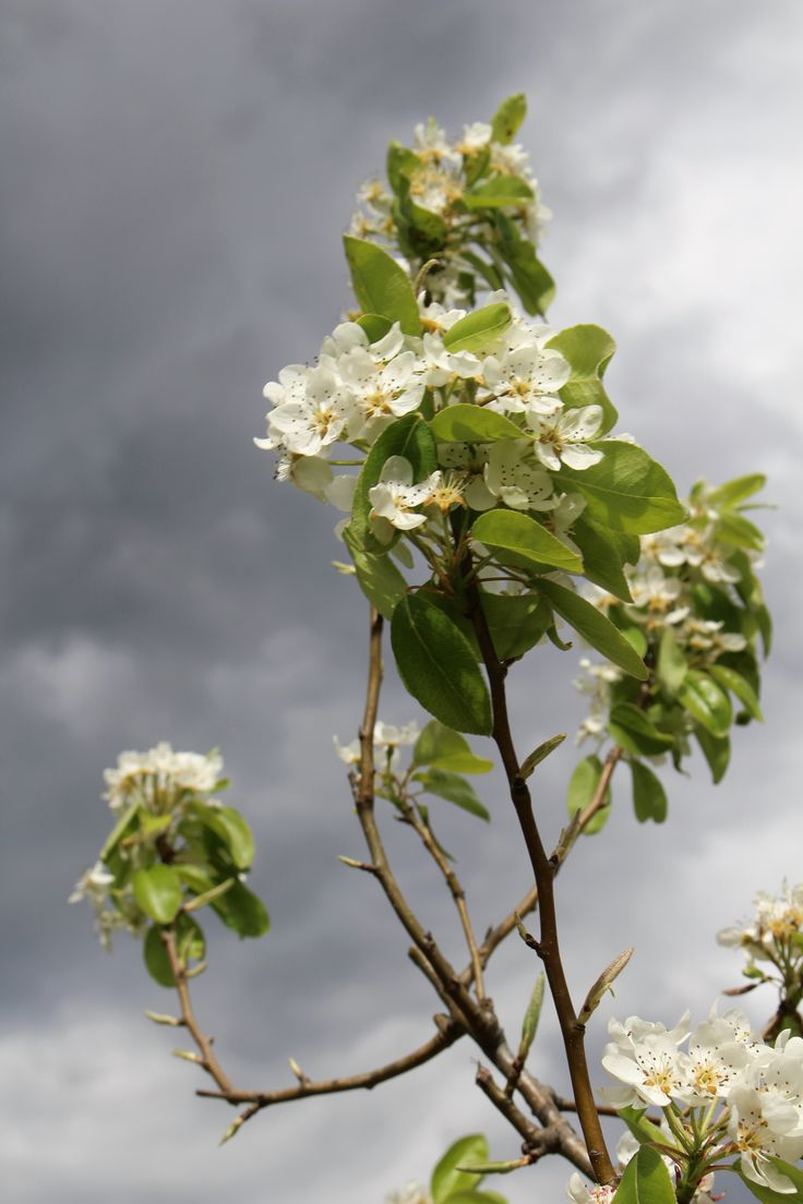 Pochi scatti di una domenica di primavera passata in campagna, dove tutto sembrava il contrario di tutto… I colori intensi dei fiori in contrasto con il legno quasi grigio dei tronchi degli a…