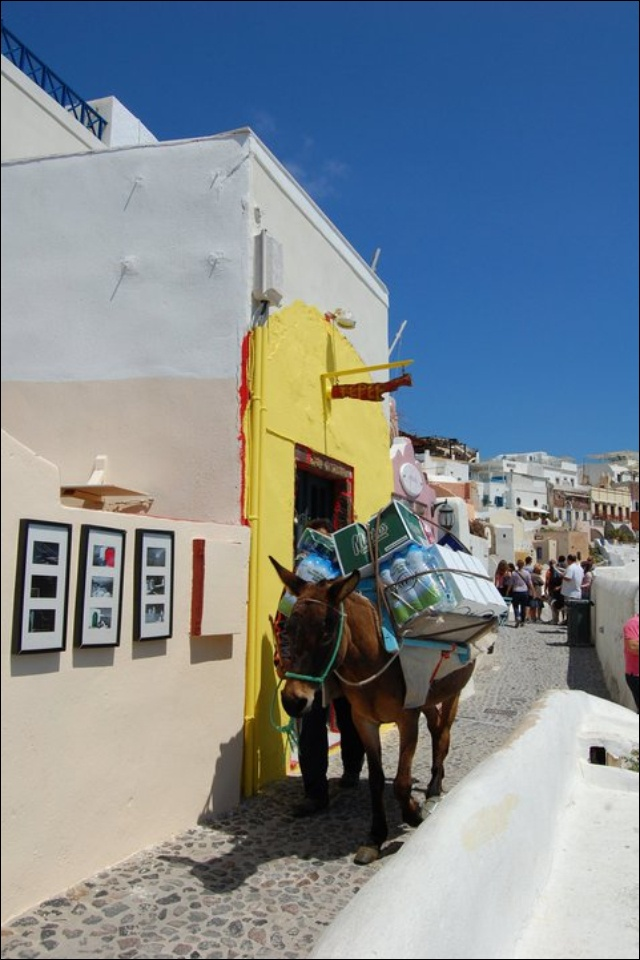 Santorini donkey, Greece. - Selected by www.oiamansion in Santorini.