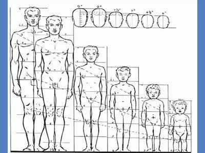 Пропорции тела человека. Масштаб