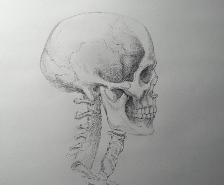 Neckline Drawing : Best images about neck on pinterest human anatomy