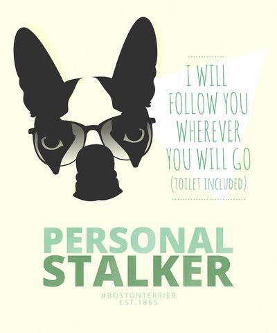 Boston Terrier: Personal Stalker. Art Print