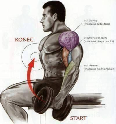 Clever Illustrations That Shows Bodybuilding Weight Training Exercises