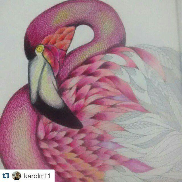 ShareIG Repost Karolmt1 Flamingo Criando Vida Reinoanimal Milliemarotta