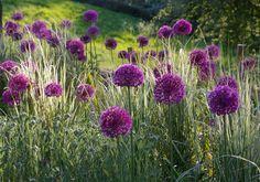 cesnaky by mozno mohli byt aj fialové ešte neviem :)