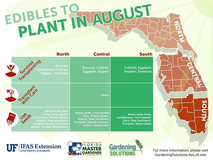 #August is a great time to start preparing your garden for #Fall planting. You can even get a head start by planting some #Edibles in August!