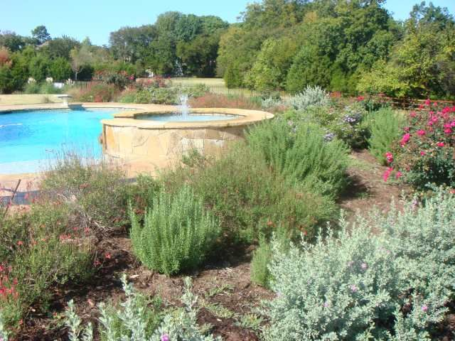 Texas Land Design- native Texas plants in landscaping- attracts birds and butterflies