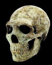 Oldest Known Skeleton of Man   neandertaller, neandertal kafatası