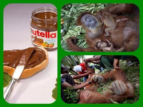 Palmöl. Dies ist ein Rohstoff, der aus den Früchten der Ölpalme gewonnen wird. Die roten Früchte werden gepresst und ein Öl, das dickflüssig und rot-orange (aufgrund des hohen Carotinengehaltes) is…