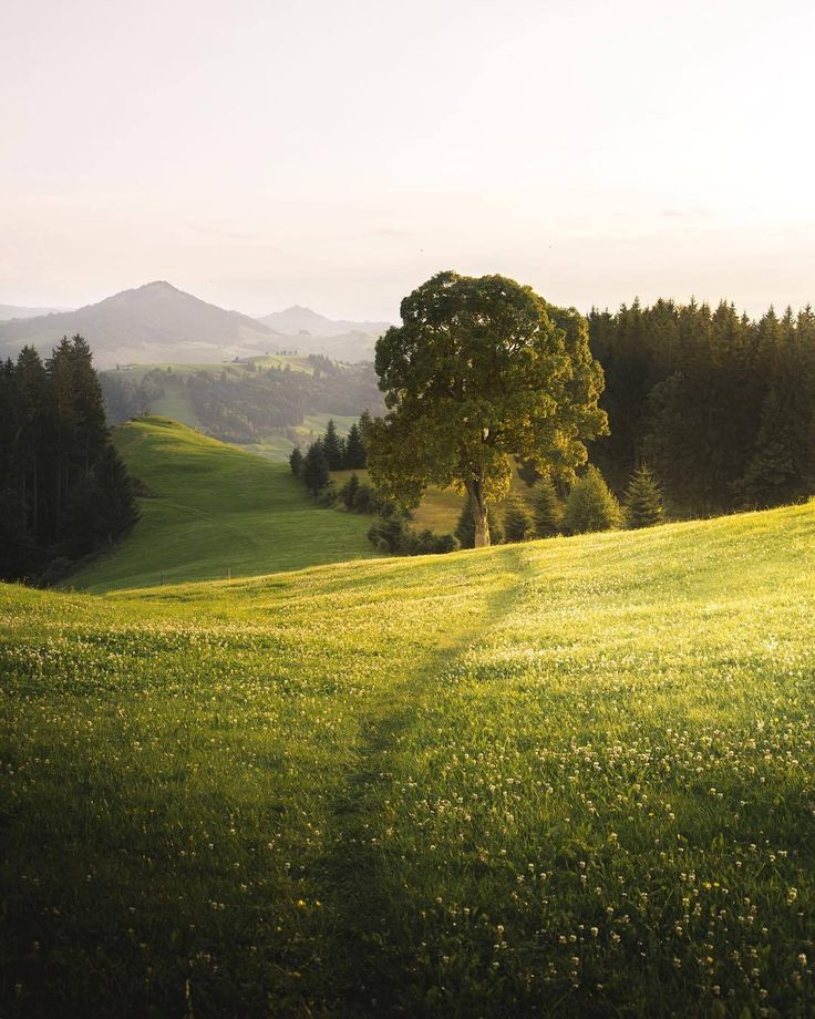 I love how the first portions of this image reminds me of the meadow and home like and the mountains in the distance give it a epic feel