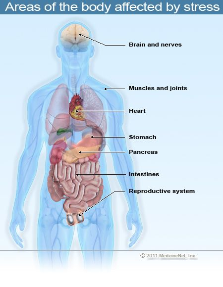 stress | Picture of some of the areas of the body that are affected by stress